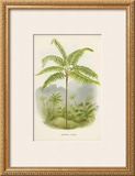 Tree Fern (Hemitelia Lindeni) Posters by Georg Dionysius Ehret
