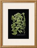 Weinmann Botanical on Black VI Prints by Johann Wilhelm Weinmann