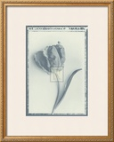 Tulip Impression II Art by Bill Philip