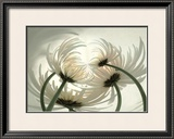 Spider Mums II Prints by Huntington Witherill