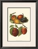 Plum Varieties I Prints by John Wright