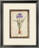 Iris Reticulata Posters by Lisa Canney Chesaux