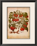 L'Herbier I Prints by Besler Basilius