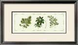 Assorted Ferns Prints by Cappello