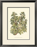 Fig Tree Branch Prints by Henri Du Monceau