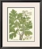 Weinmann Greenery I Print by Johann Wilhelm Weinmann