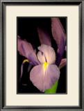 Sweet Iris II Prints by Renee Stramel