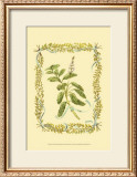 Sage Print by Wendy Russell