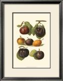 Plum Varieties II Posters by John Wright