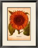 L'Herbier VI Prints by Besler Basilius