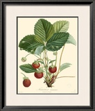 Strawberries Prints by Bessa