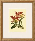 Orchid Splendor IV Prints