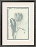 Tulip Impression I Print by Bill Philip