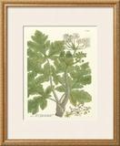Weinmann Greenery I Prints by Johann Wilhelm Weinmann