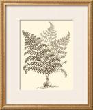 Sepia Munting Foliage VI Posters by Abraham Munting