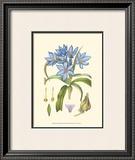 Periwinkle Blooms III Art by Samuel Curtis