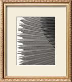 Fan Palm Art by Deb Garlick