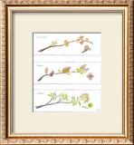Spring Branches Prints by Robbin Gourley