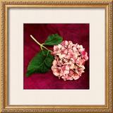 Pink Hydrangea Art by Celine Sachs-jeantet