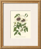 Blossoming Vine VI Prints by Sydenham Teast Edwards