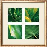 Flora Tropical Posters by Tony Koukos