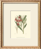 Antique Floral Plate III Print