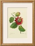Passion Flower Posters by Pierre-Joseph Redouté