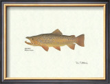 Brown Trout Posters by Ron Pittard