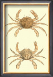 Antique Crab III Prints by James Sowerby