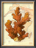 Exotic Map with Coral III Print by Deborah Bookman