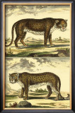 Panther and Leopard Art by Denis Diderot