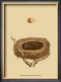 Antique Nest and Egg III Prints by Reverend Francis O. Morris