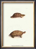 Antique Turtles I Art by J.W. Hill