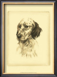 Danchin Setter Prints by  Danchin