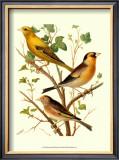 Domestic Bird Family VI Print by W. Rutledge