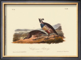 California Partridge Posters by John James Audubon