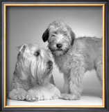 Ruff and Daisy Art by Amanda Jones