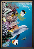 Dolphin's Reef Prints by Mark Mackay