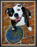 Happy Staffie Print by Robert Mcclintock