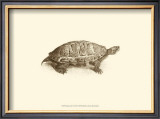 Sepia Turtle I Art by J. H. Richard