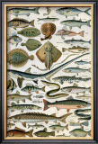Poissons Posters