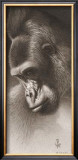 Silver Back, the Gorilla Prints by Robert L. Caldwell