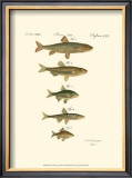 Fish Anthology I Prints by Jacob Schmuzer