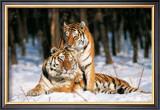 Tigres Posters by Gilles Santantonio