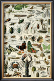 Arthropodes Posters