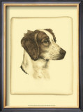 Danchin Brittany Spaniel Prints by  Danchin