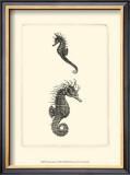 Sepia Seahorse Print