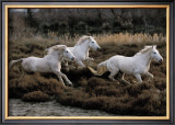 Equus, Camargue, France Art by Hans W. Sylvester