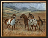 Appaloosa II Prints by Ron Jenkins