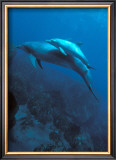 Mother and Baby Dolphins Art by Charles Glover